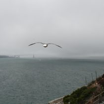 Nad San Francisco świeci już słońce, a Golden Gate Bridge cały czas spowity jest we mgle.
