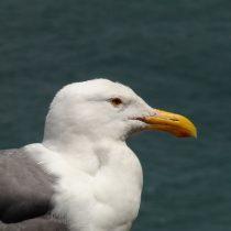 Ptak z gatunku żywych, nie znam się ale ładnie wygląda, więc zrobiłem zdjęcie.