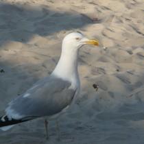 Ptaszek ma ładny dziobek, ale większą uwagę przykuwają śmieci na plaży. :-(